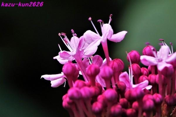DSC05574.jpg
