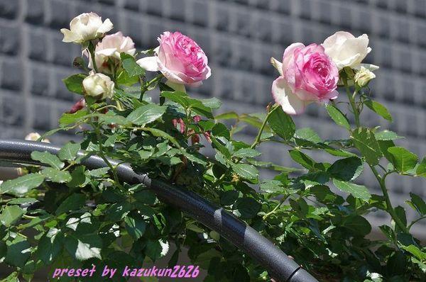 IMGP9633.jpg